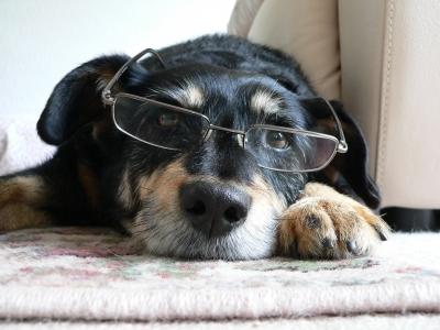 pes na delovnem mestu